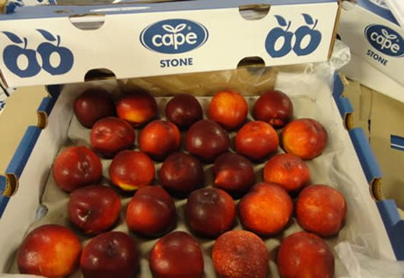 South African stone fruit exports down