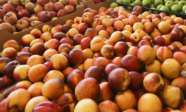EU peach and nectarine producers face competition from other summer fruits