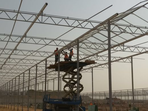 Egypt to expand greenhouse agriculture and boost date production