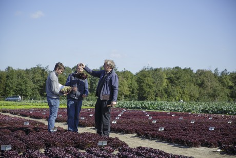 New downy mildew resistance could give organic lettuce growers more certainty