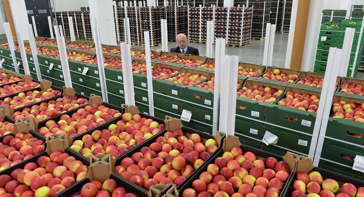 EU support for Polish apples – a demand to restore market balance