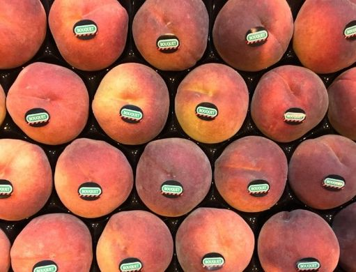 Catalonia to reduce stone fruit area by 10%