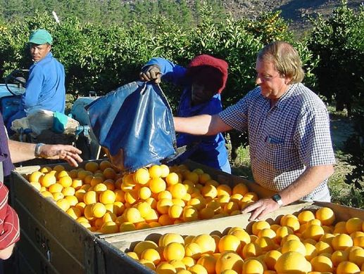 No end in sight for boom in South African citrus production