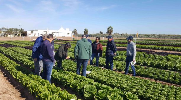New Nunhems® lettuces conquer consumers with their taste