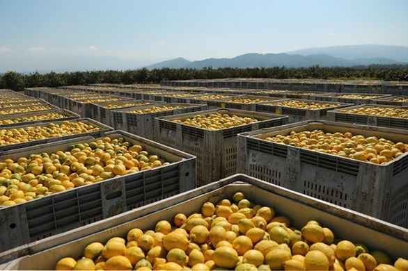 Argentina to export citrus to India and Vietnam