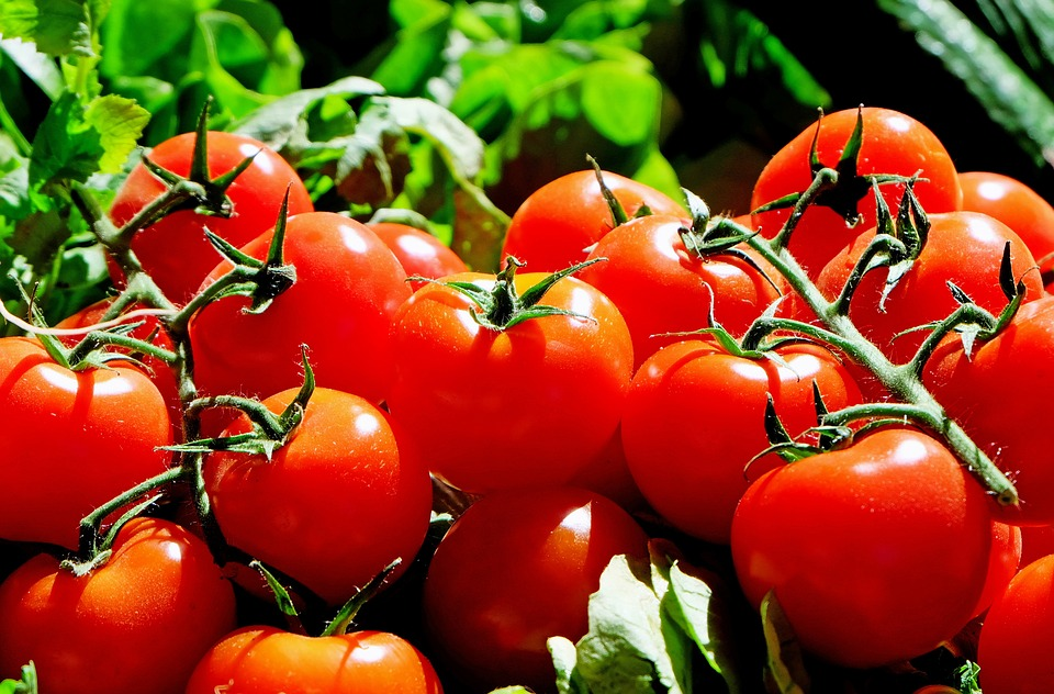 Small EU tomato crop drives higher prices