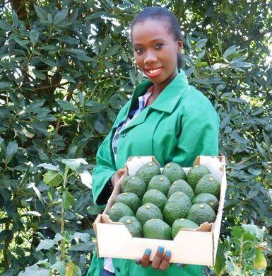 African avocado arrives on European markets