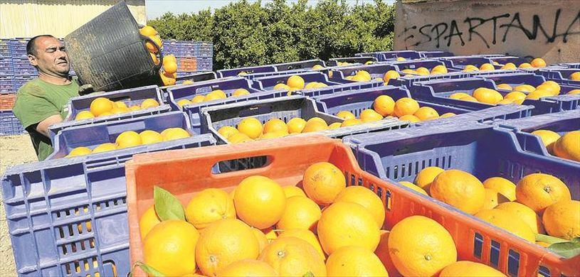 EU turns to Egypt for citrus imports