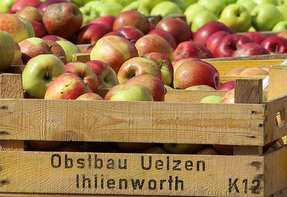 German apple market recovers during Lent