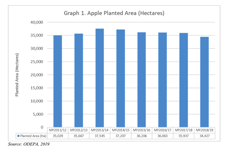 Chilean apple exports down 5% after difficult winter