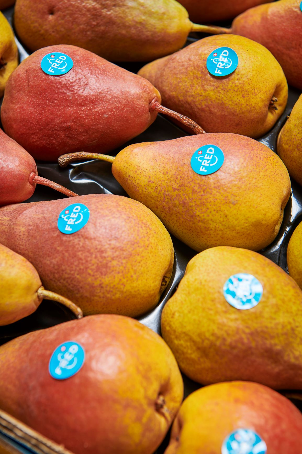 """Origine Group exclusive italian partner of the pear """"FRED®"""""""
