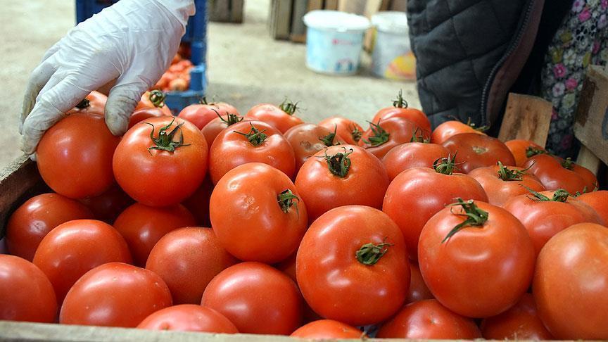 Turkey aims to increase tomato exports