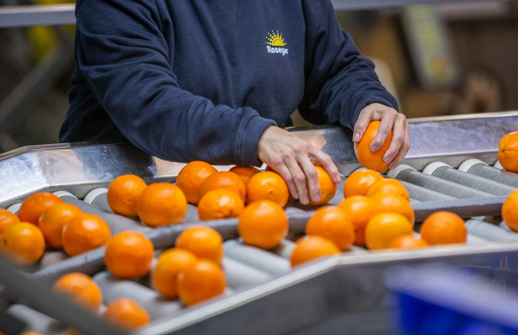 Significantly larger Spanish citrus crop expected