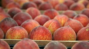 A promising outlook for Spain's peach and nectarine campaign