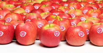 Pink Lady outperforms overall apple market