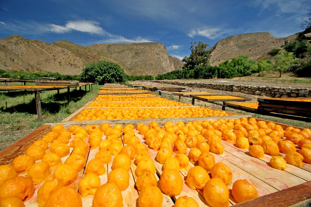 Valencian association laments absurd prices of South African citrus