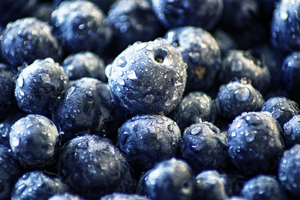 Increased blueberry production causes price crash