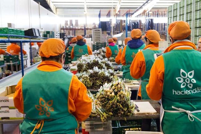 84% of Spaniards buy organics