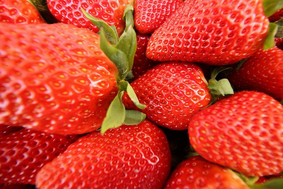 Fortuna strawberry still dominates in Huelva