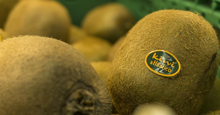 Kiwi Atlántico to begin harvesting in early November