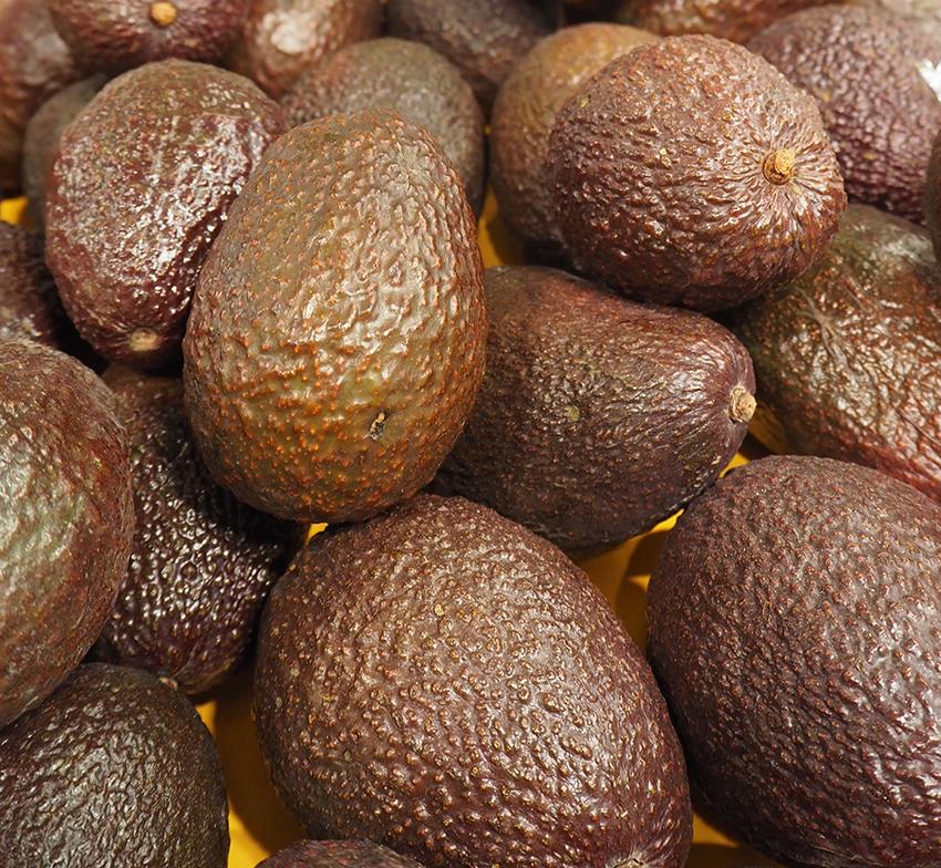 Avocado thieves strike Malaga's producers, credit: Alexandra Sautois, Eurofresh Distribution
