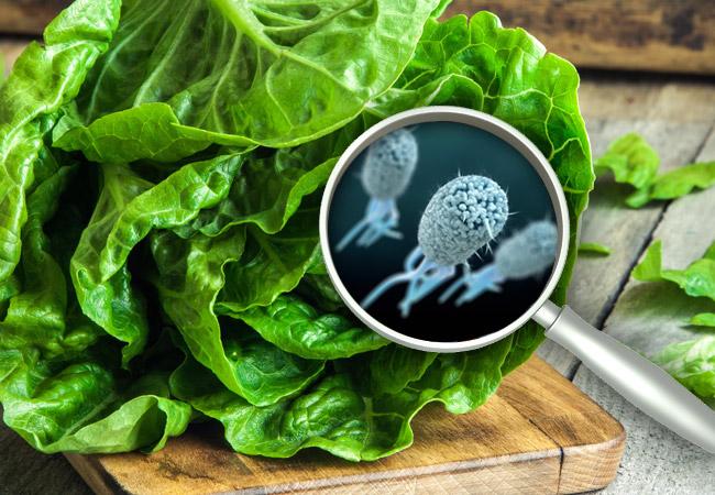E.coli outbreak in US still not over, credit: leveland Clinic, Health essentials