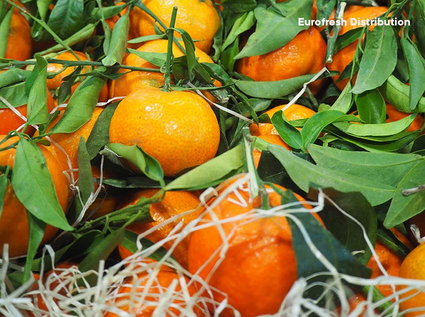 South Africa's soft citrus crops defy expectations, credit image: Alexandra Sautois, Eurofresh Distribution