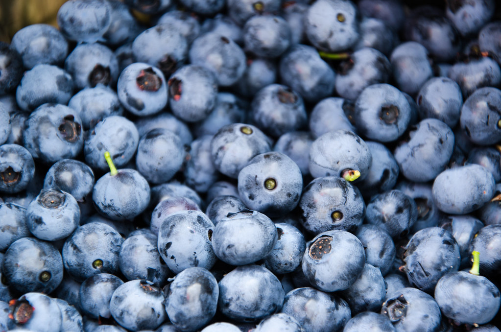 Peru increases blueberry exports ten-fold in seven years