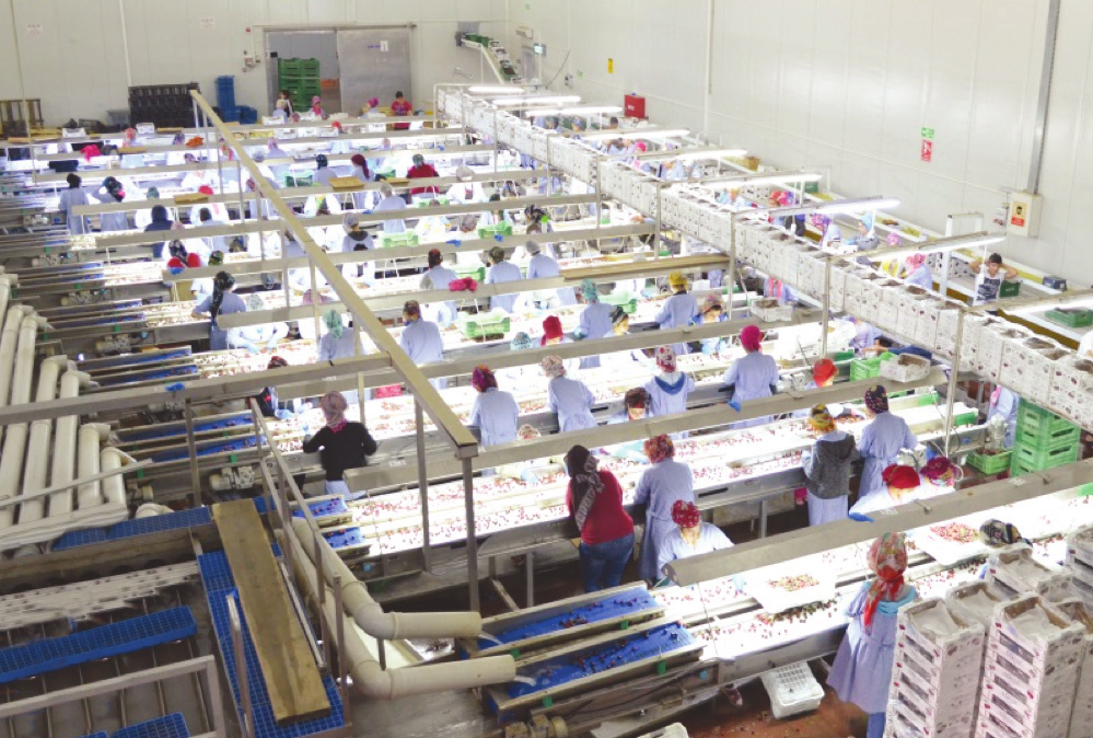 Alanar enjoys great success exporting cherries to China