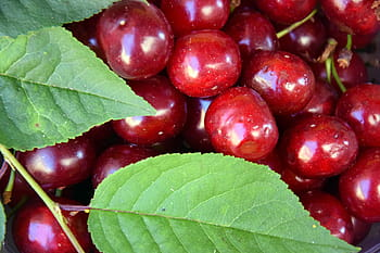 Ele.me ensures Chilean cherries are at heart of Chinese New Year Celebrations