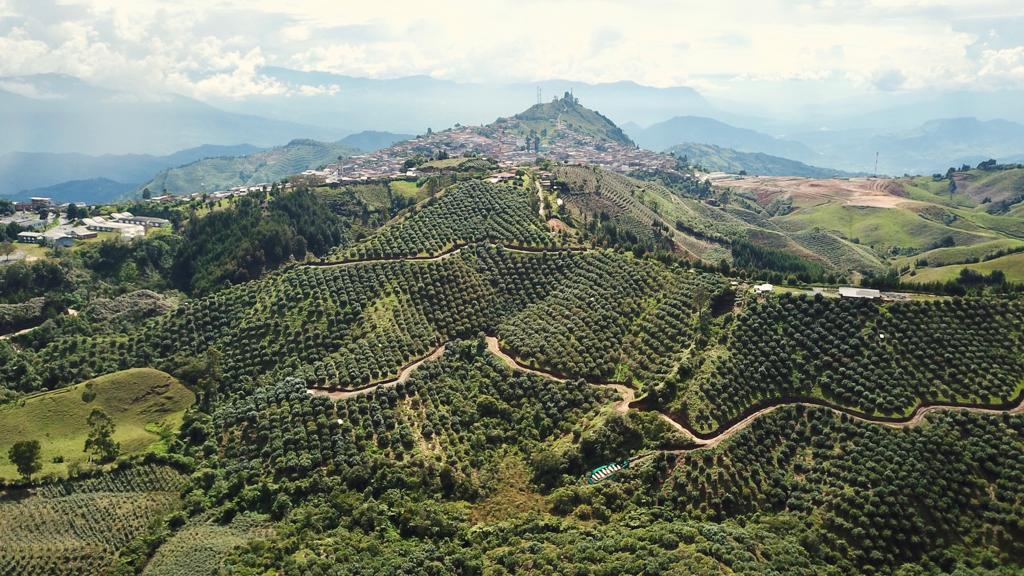 Colombia works to increase sustainable Hass avocado production