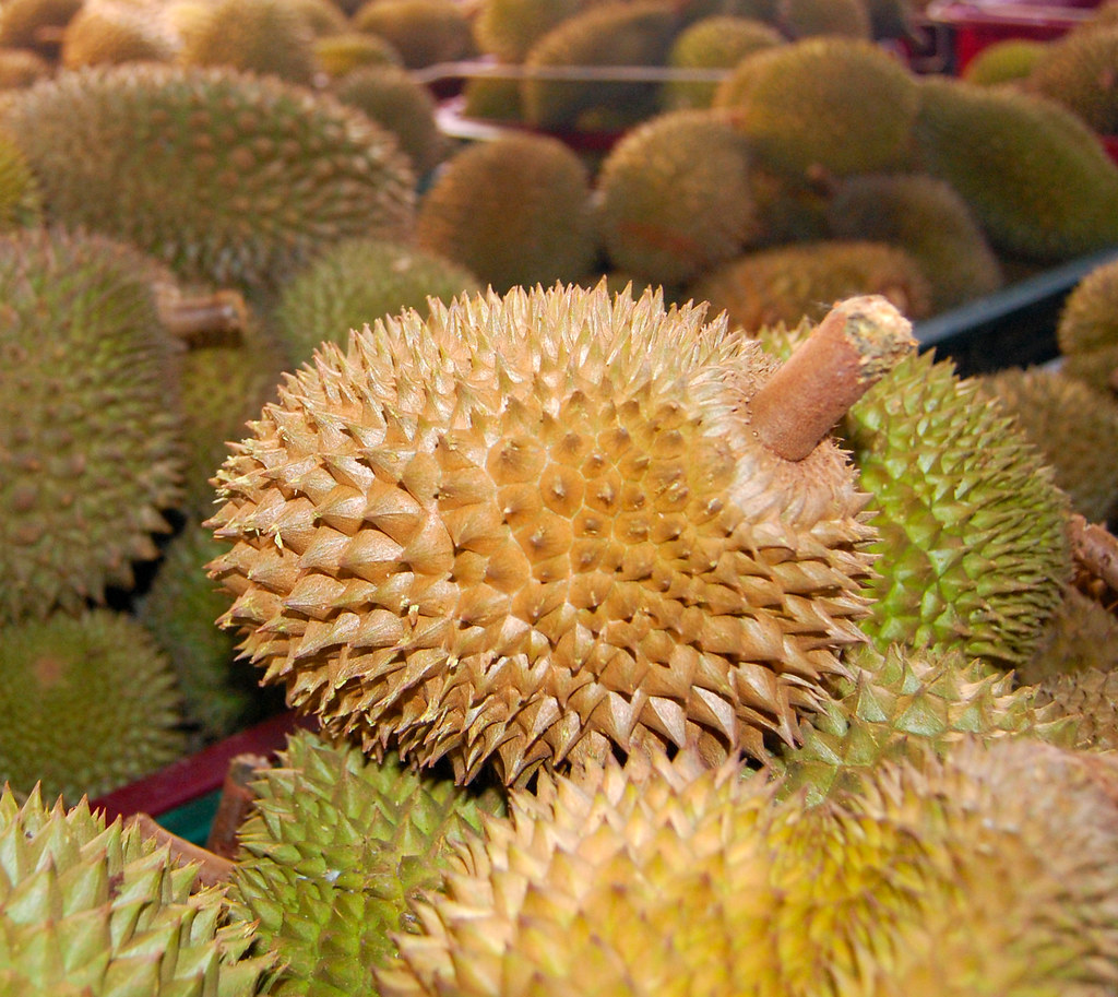 Source of durian's stick identified