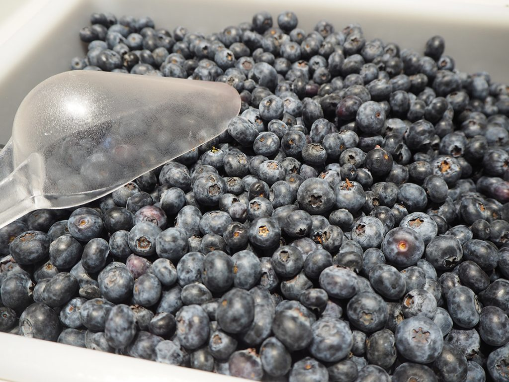 Record exports of Chilean organic blueberries