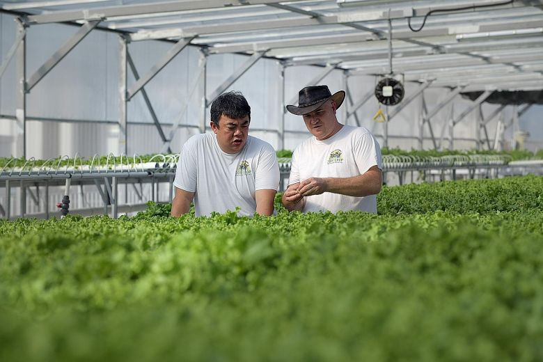 Singapore launches urban agriculture projects to expand local food supply