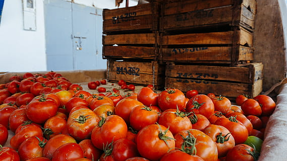 France to end Moroccan tomato imports