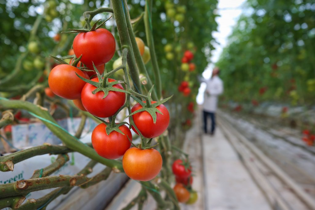Turkey's agri-food exports rise 4.5% in March