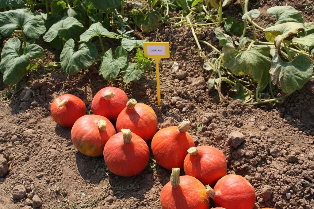EU organic fruit production increases 5% in 2018, credit. RFL