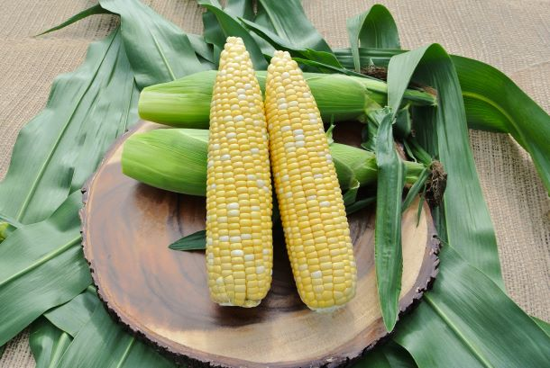 High Quality Sweet Corn for Market-leading Yield