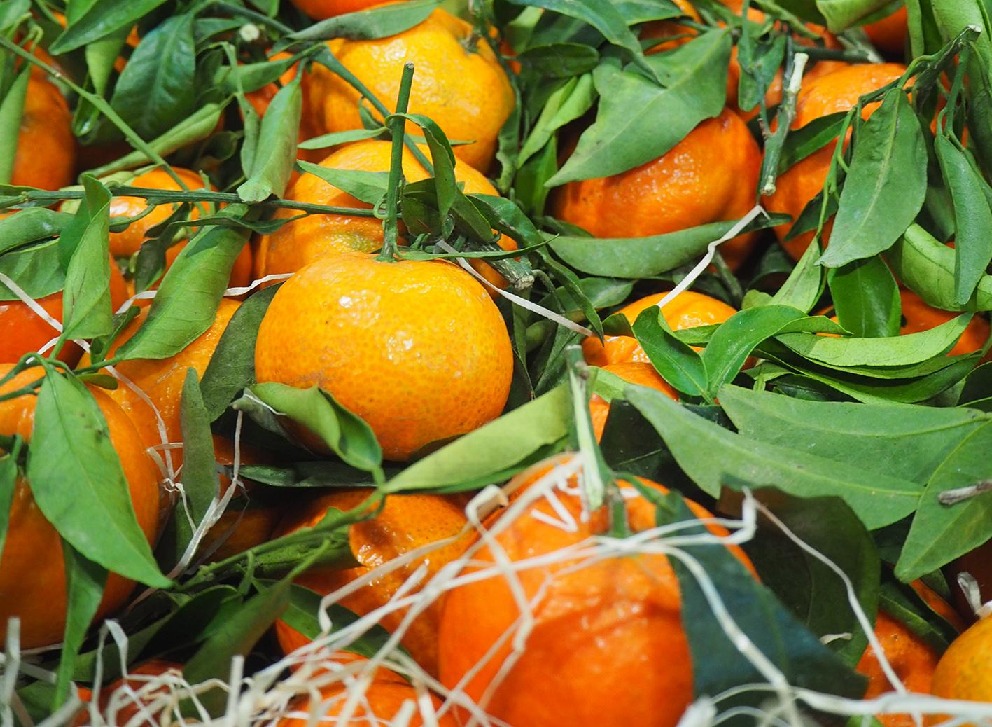 Spring Sunshine Mandarin Variety Producers Association established