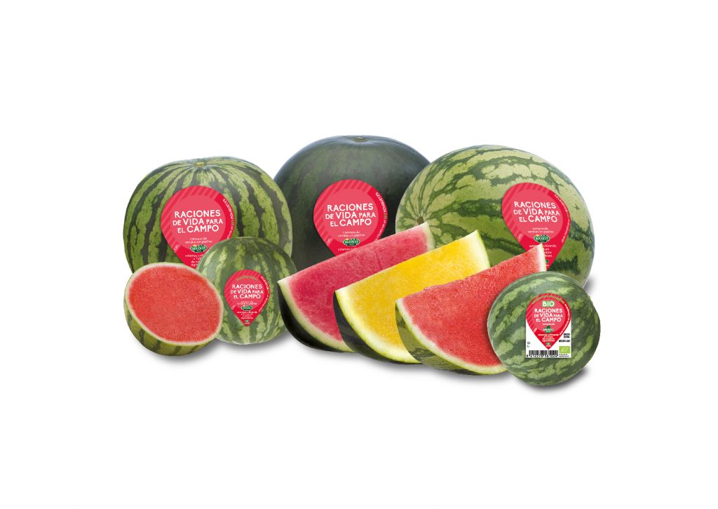 Anecoop forecasts 150,000 tons of watermelon this campaign
