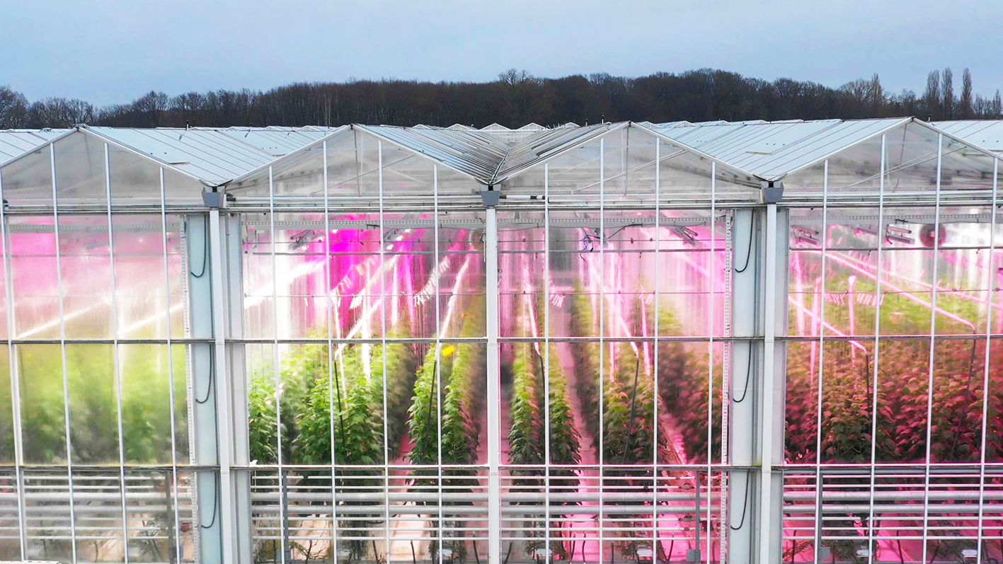 Fluence's extended PhysioSpec™ spectra enable growers to optimize lighting strategies for any crop in any growth stage or geographic location. (Photo courtesy of Fluence by OSRAM)