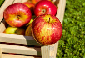 German apple prices have risen in recent months