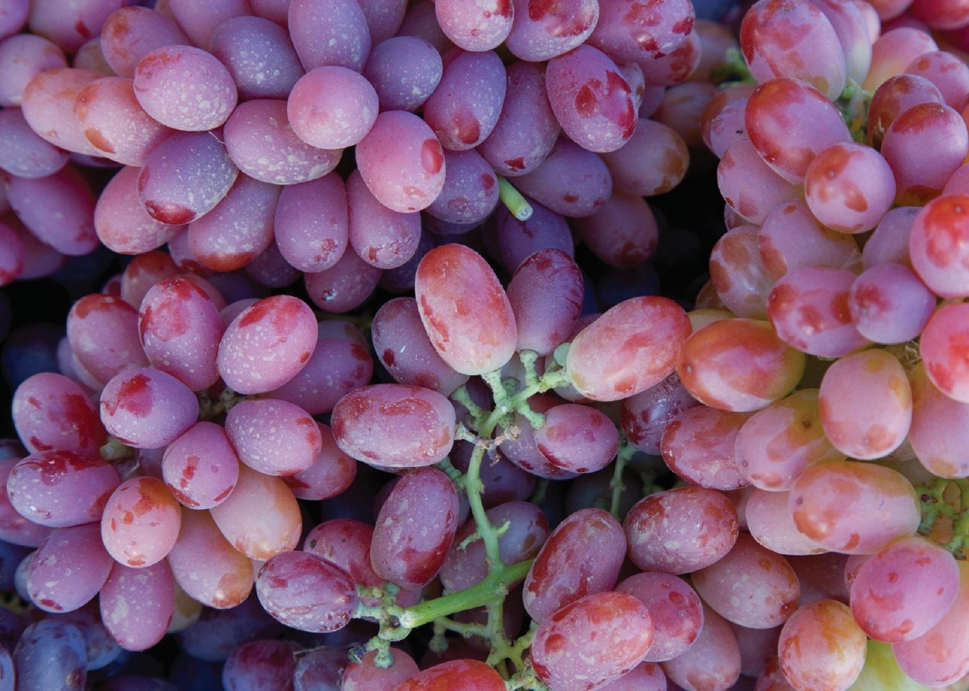 Global grape output climbs 4% despite EU losses