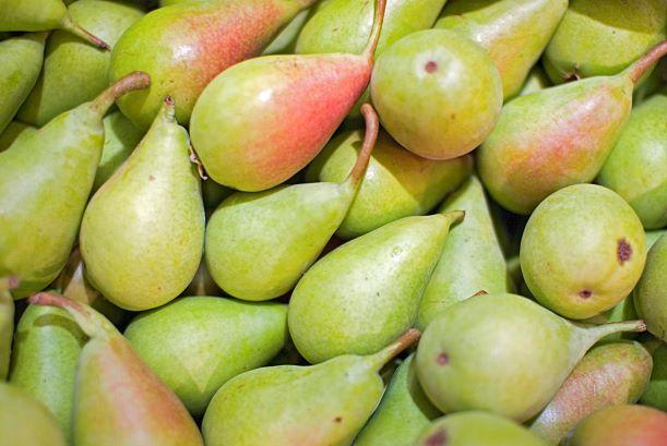 China drives larger pear crop