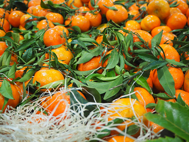 The rise and rise of South Africa's soft citrus © Eurofresh Distribution