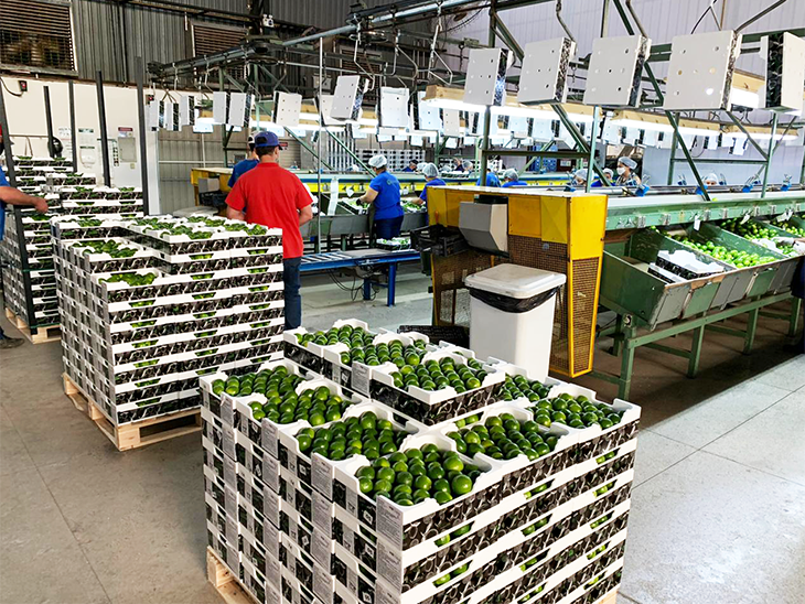 FarmFresh Conservers are used in lime exports from Brazil to Eurasia