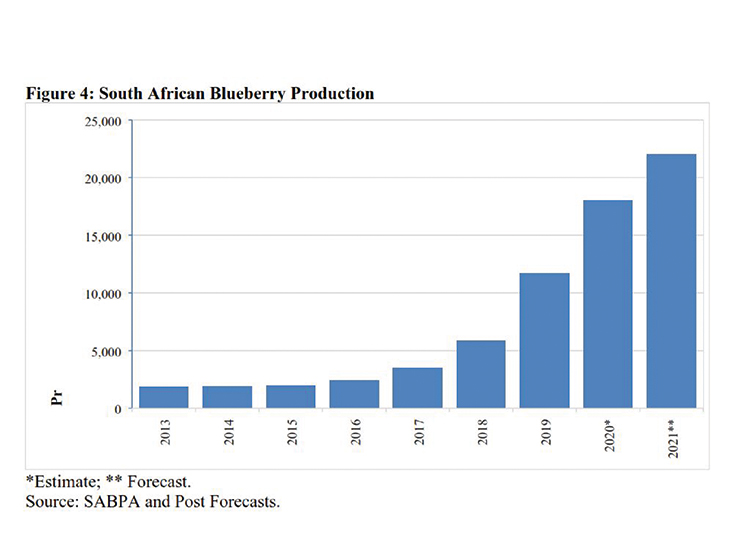 South Africa's blueberry production continues to expand