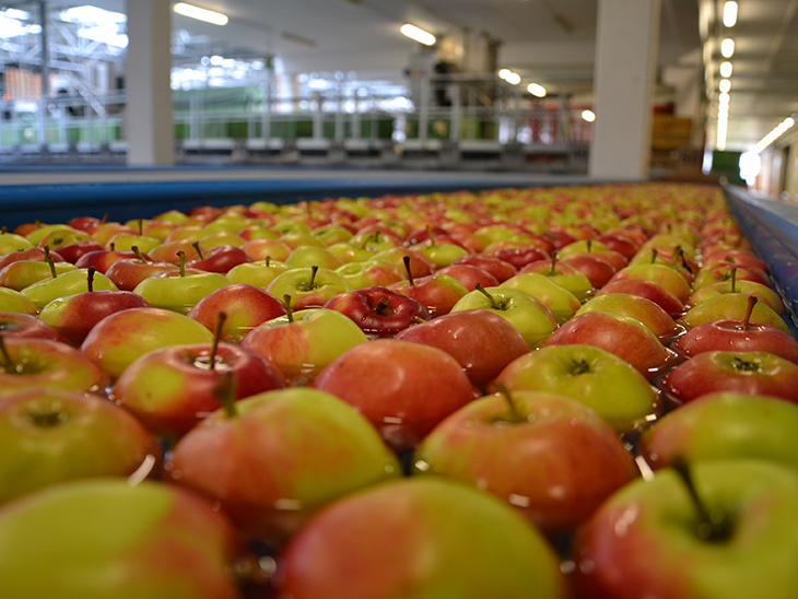 Apples from Europe Campaign and the Covid-19 Situation