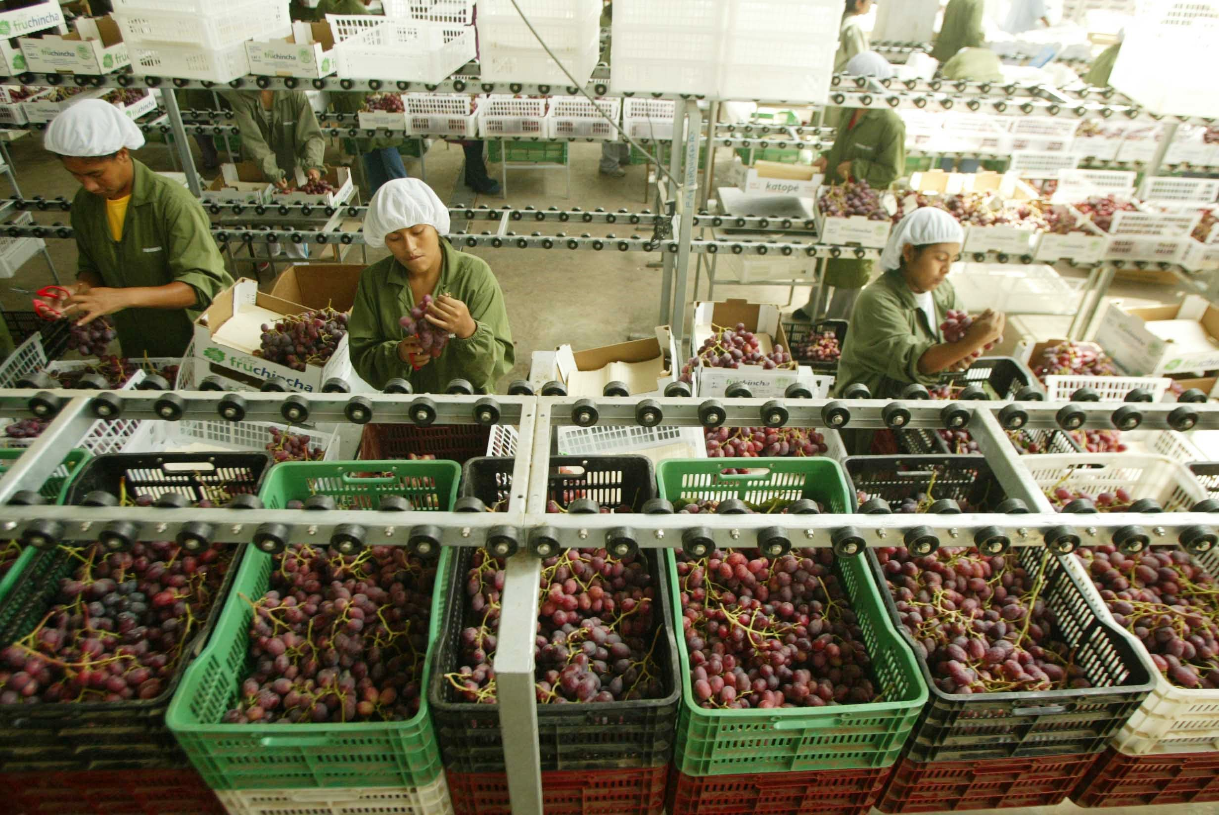 Dip in Peru's agrifood exports © ADEX