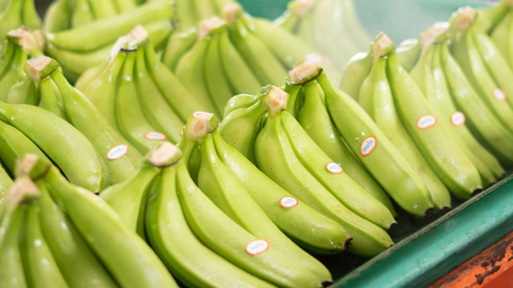 Latin American banana sector criticises Rainforest Alliance process